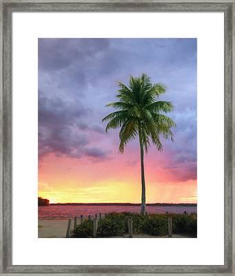 Sanibel Palm Tree Framed Print by Lori Deiter
