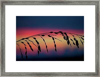 Framed Print featuring the photograph Sanibel Sea Oats by Melanie Moraga