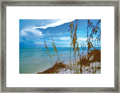 Framed Print featuring the photograph Sanibel Sea Oats by Timothy Lowry