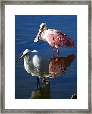 Sanibel Water Fowl Framed Print by Wayne Skeen