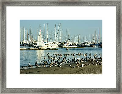 Santa Barbara California Crowded Marina Framed Print