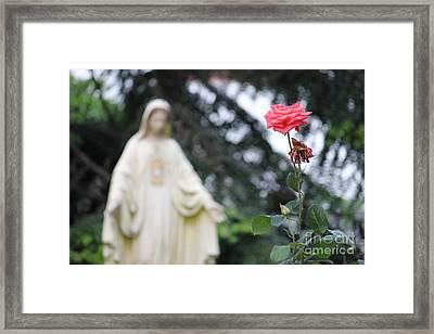 Framed Print featuring the photograph Santa Catalina Rose by Wilko Van de Kamp