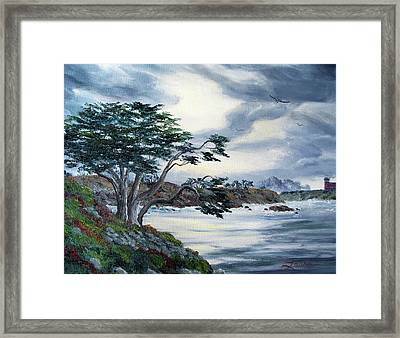 Santa Cruz Cypress Tree Framed Print by Laura Iverson