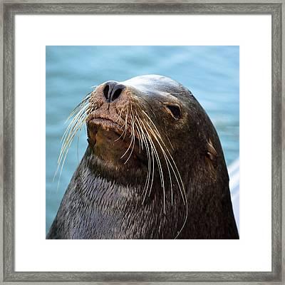 Santa Cruz Dude - Sea Lion Framed Print