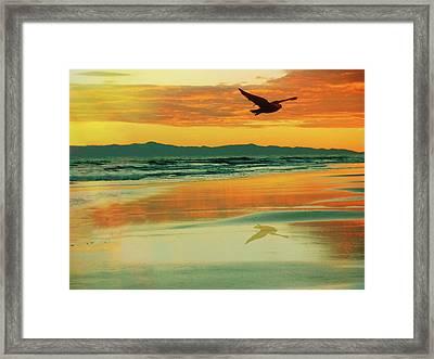 Santa Cruz Seagull Framed Print