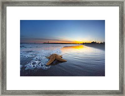 Santa Cruz Starfish Framed Print