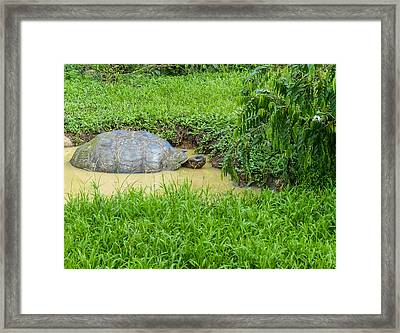 Santa Cruz Tortoise Cool-down Framed Print by Harry Strharsky