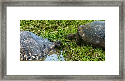 Santa Cruz Tortoise Meeting Framed Print by Harry Strharsky