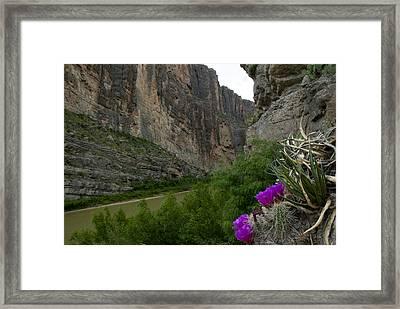 Santa Elena Canyon Blooming Framed Print by Kevin Bain