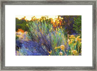 Santa Fe Beauty Framed Print by Stephen Anderson
