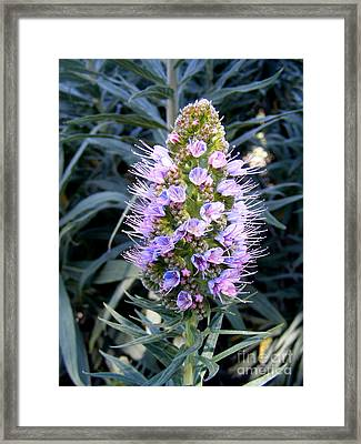 Santa Monica In Bloom Framed Print