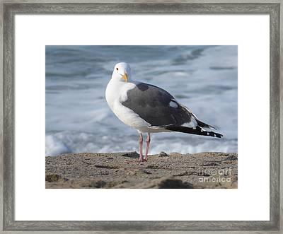 Santa Monica Seagull Framed Print by Margaret Brooks