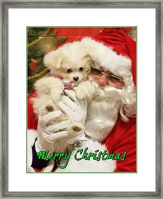 Santa Paws  Framed Print by Darren Robinson