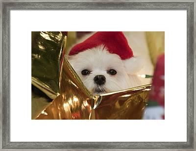 Santa Paws Framed Print by Leslie Leda