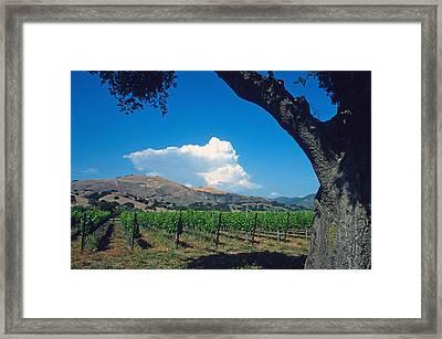 Santa Ynez Vineyard View Framed Print by Kathy Yates