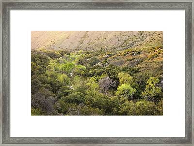 Santa Ysabel Creek At Boden Canyon Framed Print