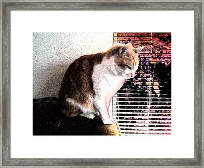 Santana Reflects Framed Print by Eric Forster
