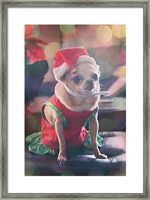 Framed Print featuring the photograph Santa's Little Helper by Laurie Search