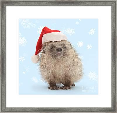 Santa's Prickly Pal Framed Print