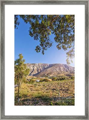 Santorini Vineyard Framed Print
