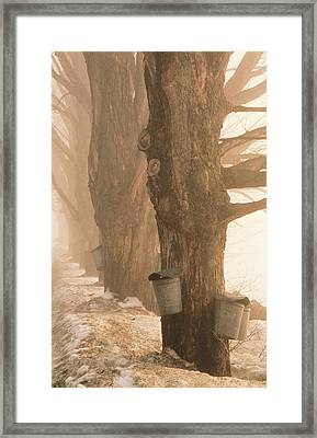 Sap Buckets. Underhill, Vermont Framed Print by George Robinson
