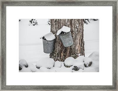 Sap Buckets Framed Print by Robert Clifford