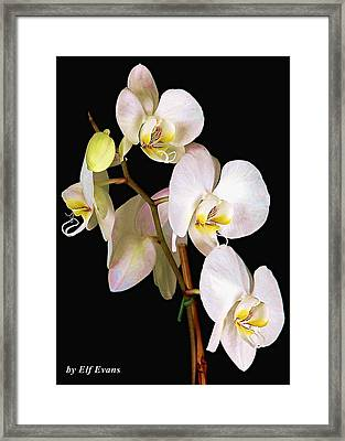 Framed Print featuring the photograph Sara Ella by Elf Evans