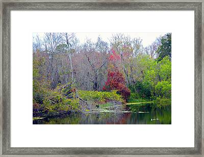 Framed Print featuring the photograph Sarasota Reflections by Madeline Ellis