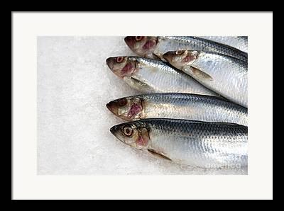 Fishmongers Framed Prints