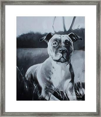 Sasha - The Third  Framed Print by Lin Petershagen