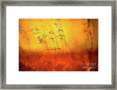 Saskatchewan Beauty Framed Print by Ian McGregor