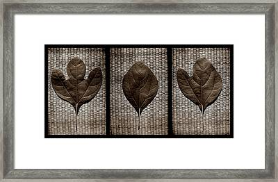 Sassafras Leaves With Wicker Framed Print