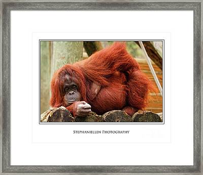 Sassy Orangutan Framed Print by Stephanie Hayes