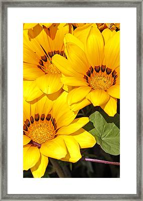 Framed Print featuring the photograph Satin Yellow Florals by E Faithe Lester