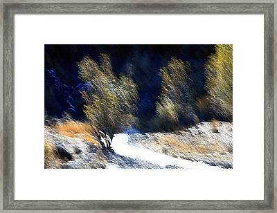 Satisfied Framed Print by Robert Shahbazi