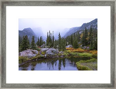 Saturated Forest Framed Print by Chad Dutson