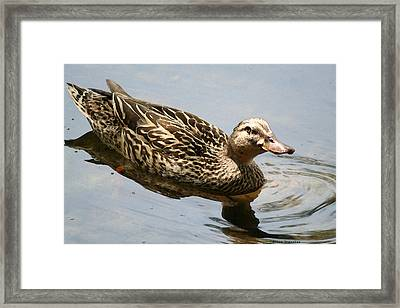 Saturday At The Pond Framed Print by Diana Gonzalez