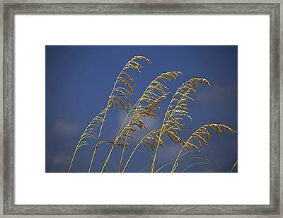 Framed Print featuring the photograph Saturday Sway by Michiale Schneider