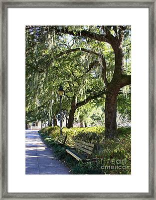 Savannah Benches Framed Print by Carol Groenen