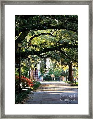 Savannah Park Sidewalk Framed Print