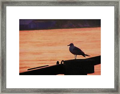 Savannah River Framed Print by JAMART Photography