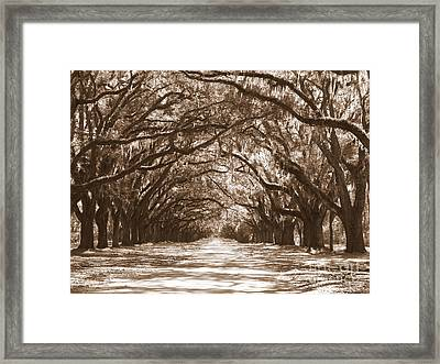 Savannah Sepia - Glorious Oaks Framed Print by Carol Groenen