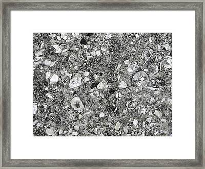 Savannah Sidewalk Of Shells Framed Print by Leslie Revels Andrews