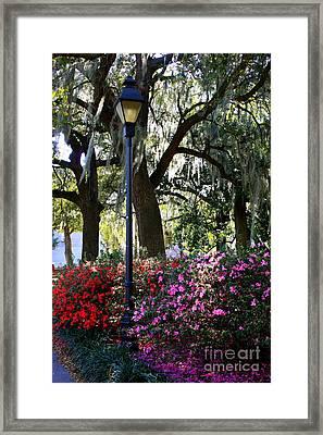 Savannah Street Lamp In Springtime Framed Print by Carol Groenen