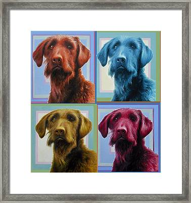 Savannah The Labradoodle Framed Print by Hans Droog