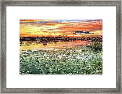 Savannas Sunset Framed Print