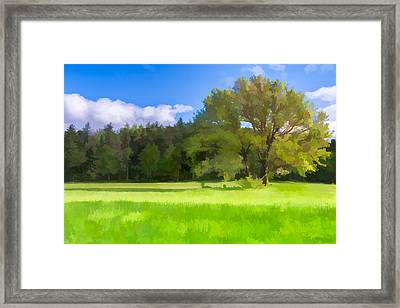 Save My Tree  II Framed Print by Jon Glaser