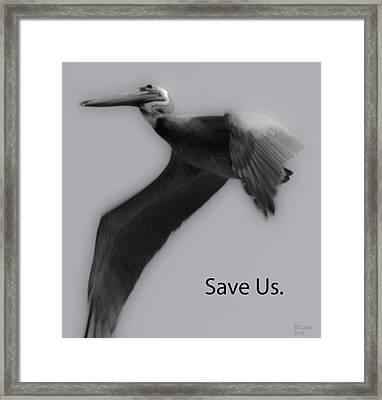 Save The Pelicans Framed Print by Betsy Knapp