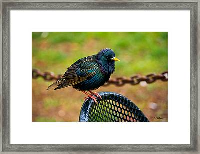 Saving A Seat Framed Print by Christopher Holmes