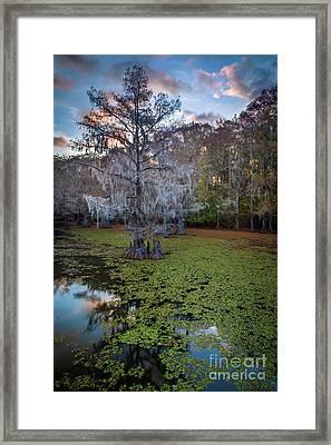 Saw Mill Pond Tree Framed Print